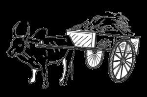 Oriane, illustration zébu