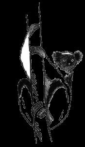 Oriane, lémurien
