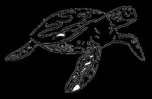 Oriane, tortue